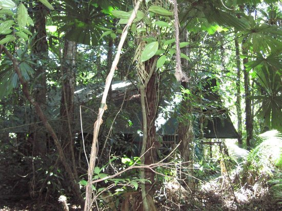 Daintree Crocodylus: You could get lost in here...!