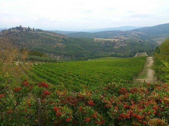 Castello di Verrazzano: Overlooking the Verrazzano vineyard