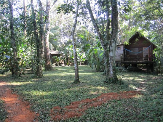 Parrot Nest Lodge: cabins