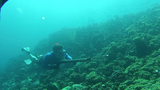 Spearfishing Puerto Rico: hunting