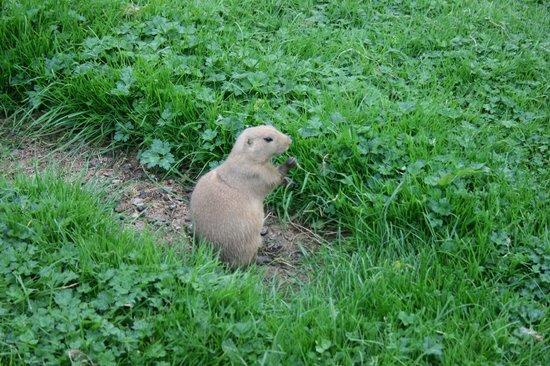 Coolwood Wildlife Park: prairie dog