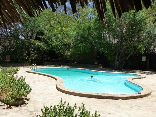 Samburu Intrepids Luxury Tented Camp: Nice pool...great after a day on safari