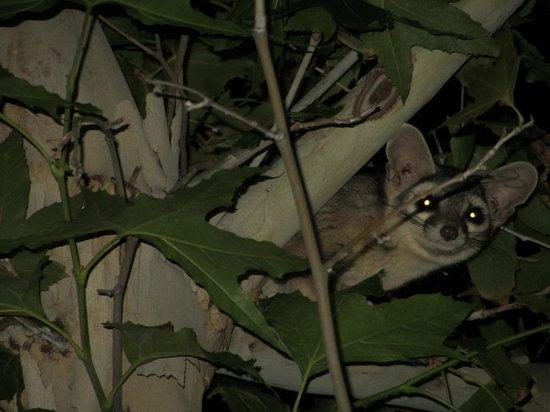 Phantom Ranch: little critters love Phantom as well