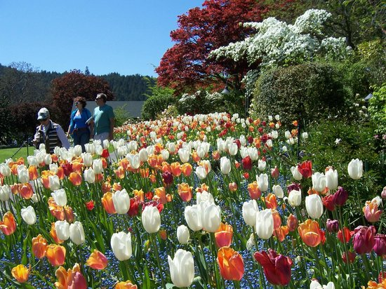 The Butchart Gardens: Tulips