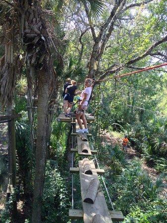 Treetop Trek: Challenge