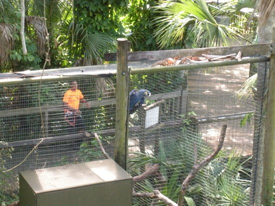 Treetop Trek: Monkey Cage under us