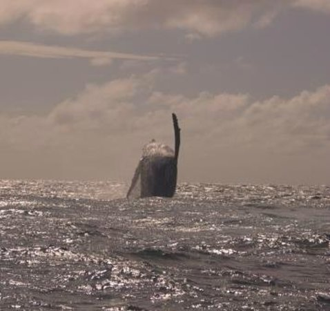 Whale Swim, Fish & Dive Tours: Arobic dancing