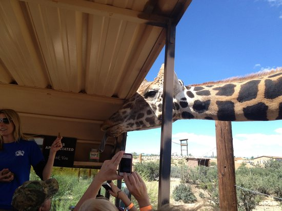 Out of Africa Wildlife Park: Griaffe getting up and personal!