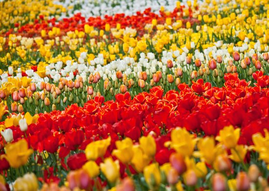 Floriade: Fields of flowers