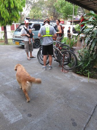 SpiceRoads Cycle Tours - Chiang Mai Day Tours: Even a golden retriever...