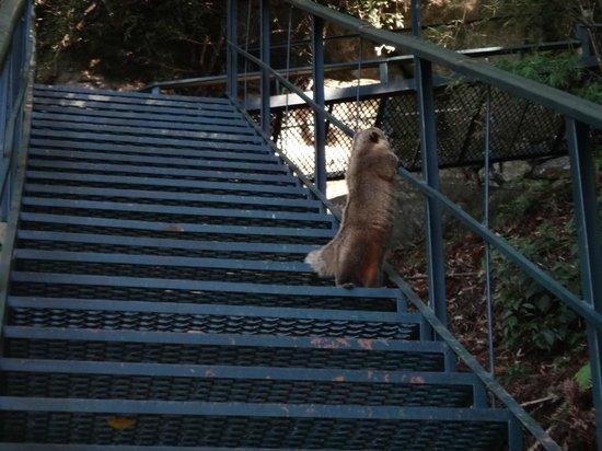 Caracol State Park: A escadaria para chegar no final da cachoeira tinha muitos animais!