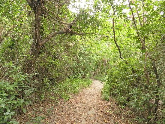 John D. MacArthur Beach State Park: Trail