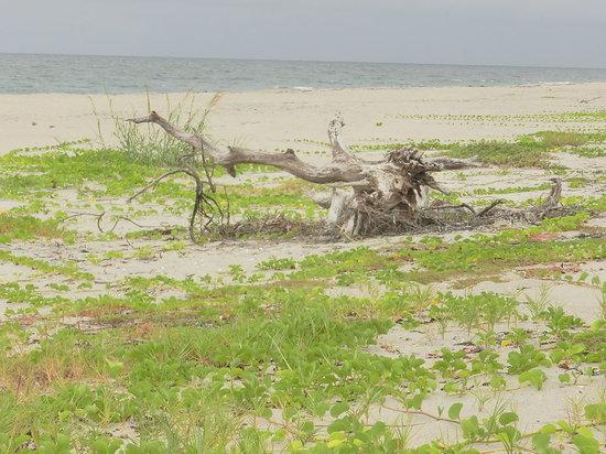 John D. MacArthur Beach State Park: Beach scenery