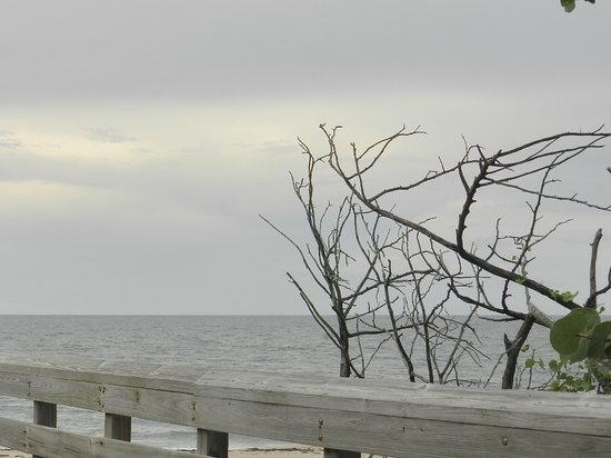 John D. MacArthur Beach State Park: beach view