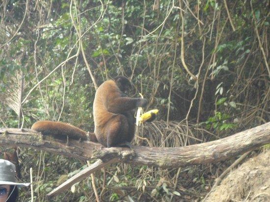 Amazonia Expeditions' Tahuayo Lodge: Dorilla