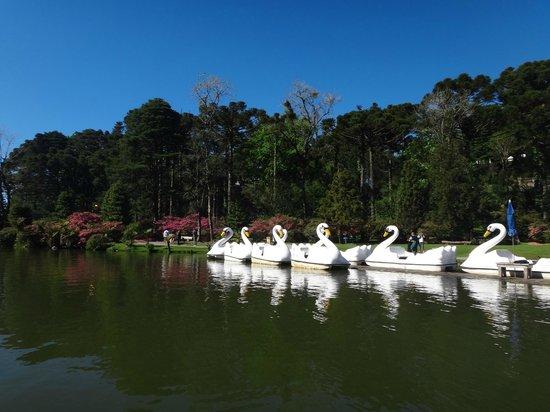 Black Lake: Os pedalinhos para um passeio romântico!