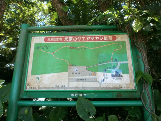 Yaeyama-yashi of Yonehara: Map of Yaeyama-yashi forest