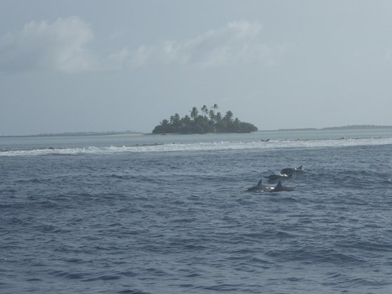Rihiveli by Castaway Hotels & Escapes: Dolphin outside reef