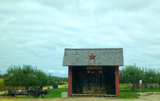Washburn's Windy Hill Orchard: Shed containing straw and corn stalks for sale