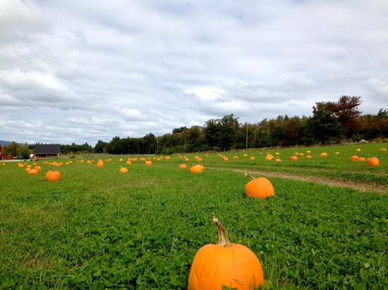 Washburn's Windy Hill Orchard: Pumpkin patch