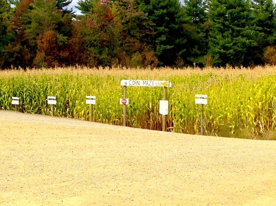 Washburn's Windy Hill Orchard: The corn maze