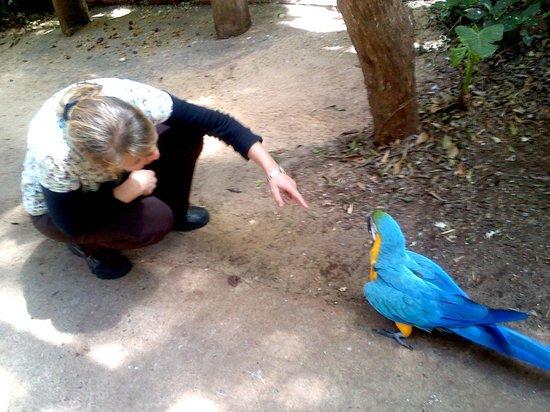 Parque das Aves: bem perto da arara azul