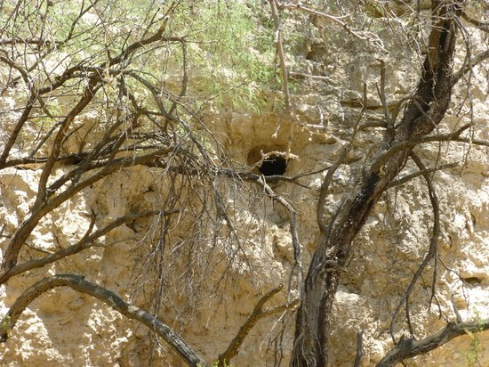 Montezuma Castle National Monument: an opening in the cliffs seen through the trees