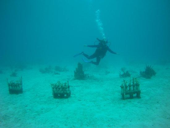 Rasta Reefers Club / AquaAmys