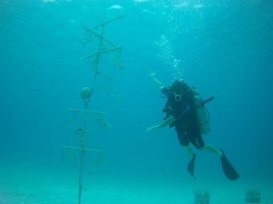 Rasta Reefers Cllub/ AquaAmys