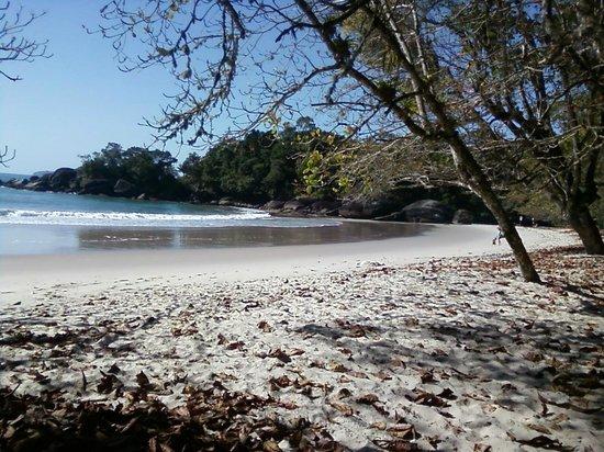 Felix Beach: Muito verde