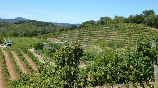 Awesome View of The Benziger Family Winery