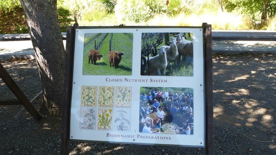 Benziger Family Winery: The Benziger Winery
