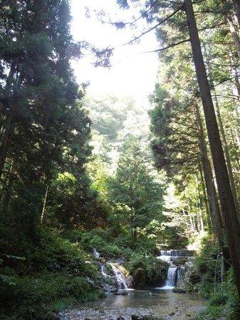 Hossawa Falls: 森林