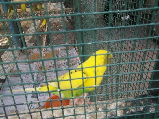 St. Thomas Mount National Shrine: Bird