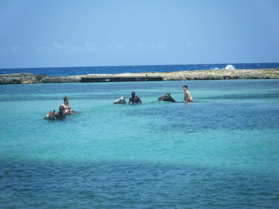 Braco Stables: Swimming with the horses