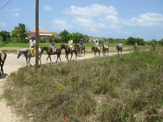 Braco Stables: Always travelling in single file