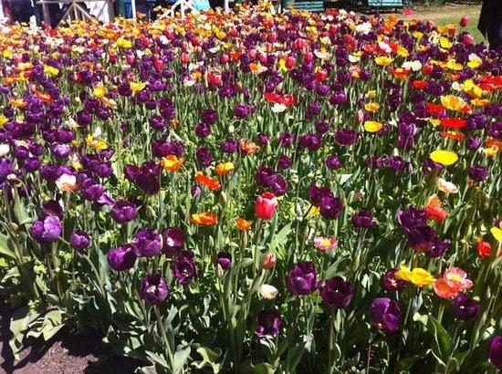 Colourful Floriade
