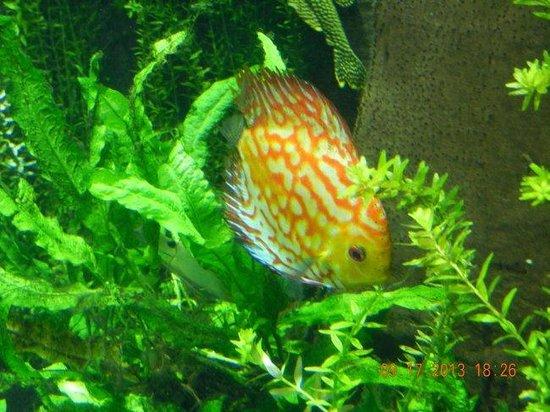 Georgia Aquarium: Fish
