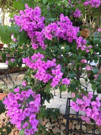 Hotel Boskinac: lovely garden