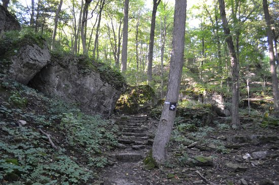 Niagara Glen Nature Areas: part of the trail