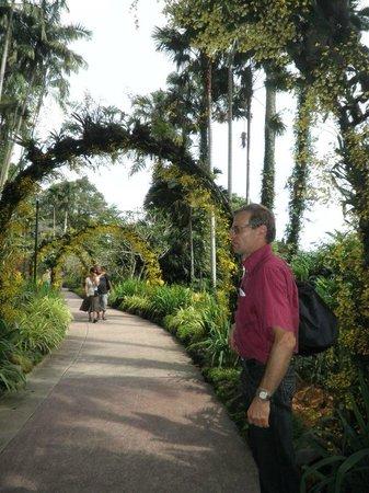 สวนพฤกษชาติสิงคโปร์: es amplio y lleno de orquideas