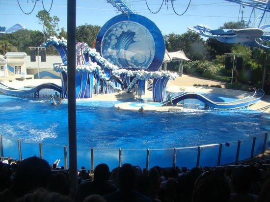 ซีเวิลด์ ออร์แลนโด: Apresentação das baleias