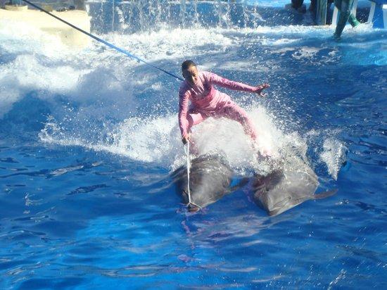 ซีเวิลด์ ออร์แลนโด: Golfinhos