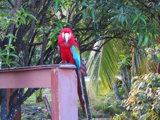 Excellence Punta Cana: Macaw