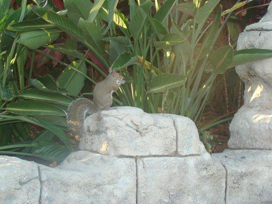 ซีเวิลด์ ออร์แลนโด: Esquilo