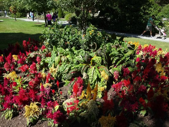 Halifax Titanic Historical Tours: Flowers at public gardens