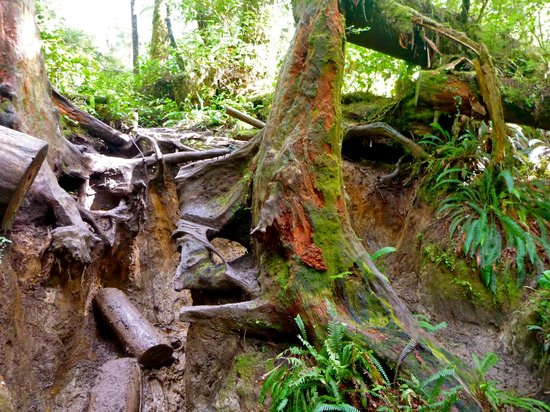 West Coast Trail: That is the trail - find the rope and pull yourself up thru the mud.