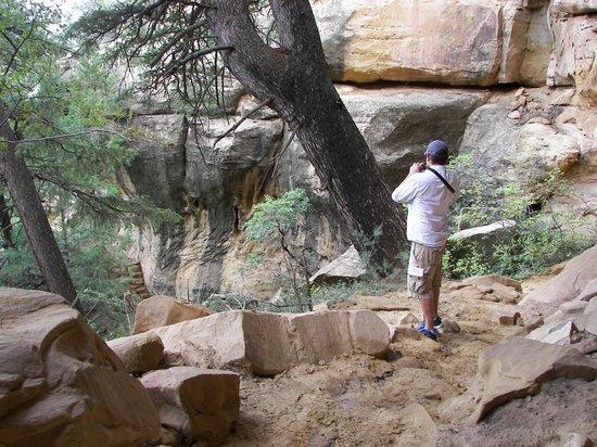 Petroglyph Point Hike: trail