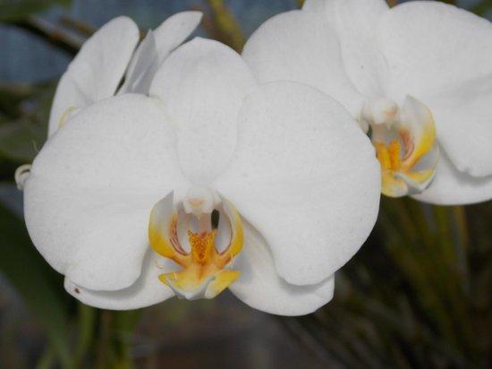 Villa Lobos Park: Orquídeas