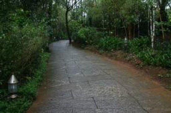 คลับมหินทรา โกดาคูแวลเลย์: Awesomely maintained inside roads